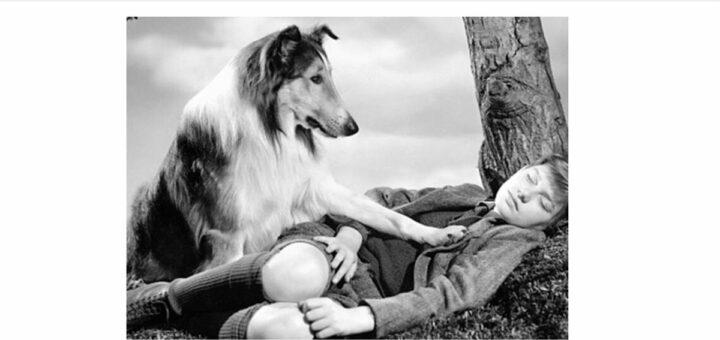 image extraite de la série télévisuelle Lassie